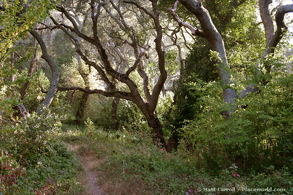 9257-live-oak-forest