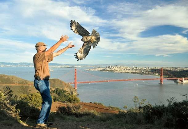 bird release