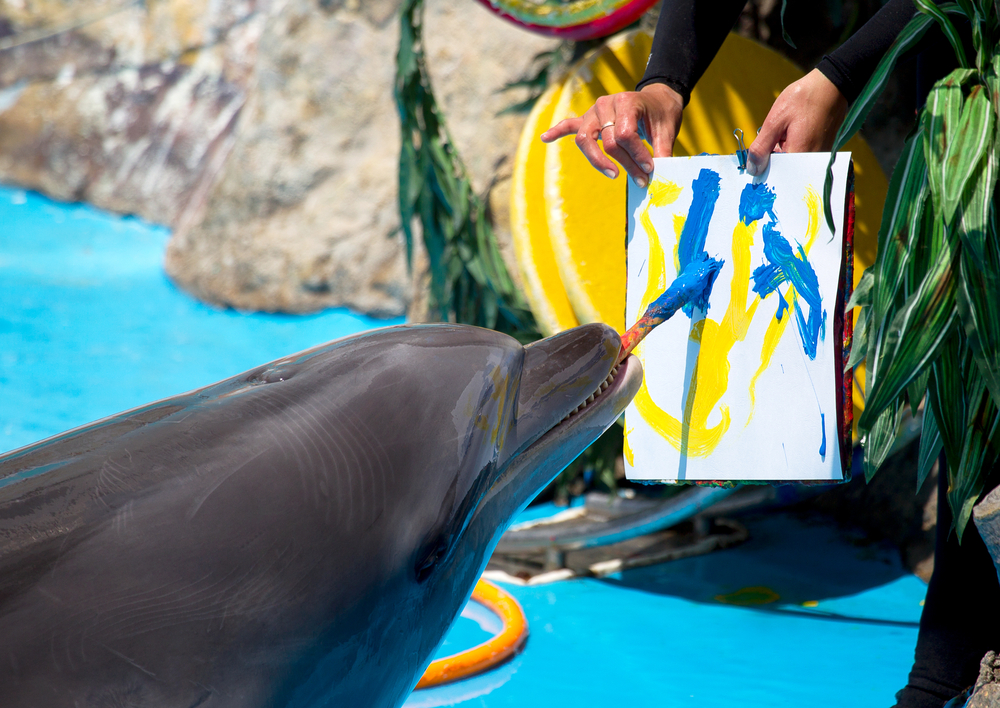 dolphin-painting