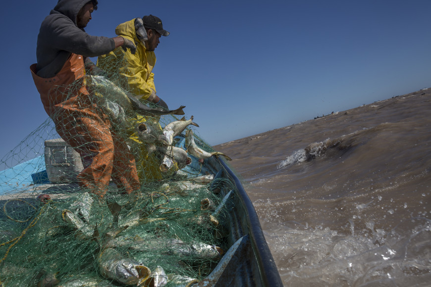 Fishermen from the Cocopah community raise their nets in the gulf of the Rio Colorado during the Curvina season.